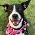 Adoptable (Official) Georgia Dogs for August 15, 2018