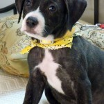 Adoptable (Official) Georgia Dogs for August 8, 2018