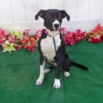 Adoptable (Official) Georgia Dogs for August 20, 2018