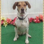 Adoptable (Official) Georgia Dogs for August 30, 2018