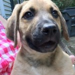 Adoptable (Official) Georgia Dogs for August 29, 2018