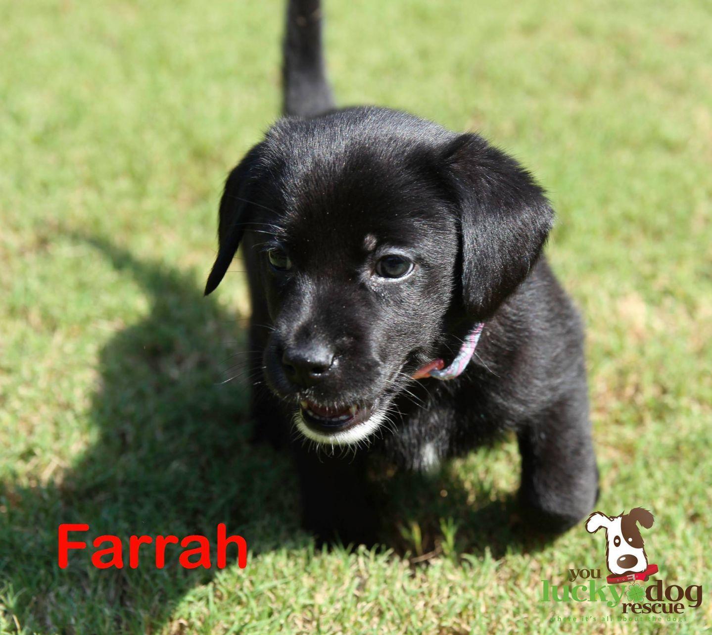 Farrah Kennedy Dog