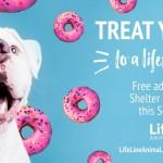 Adoptable (Official) Georgia Dogs for September 14, 2018