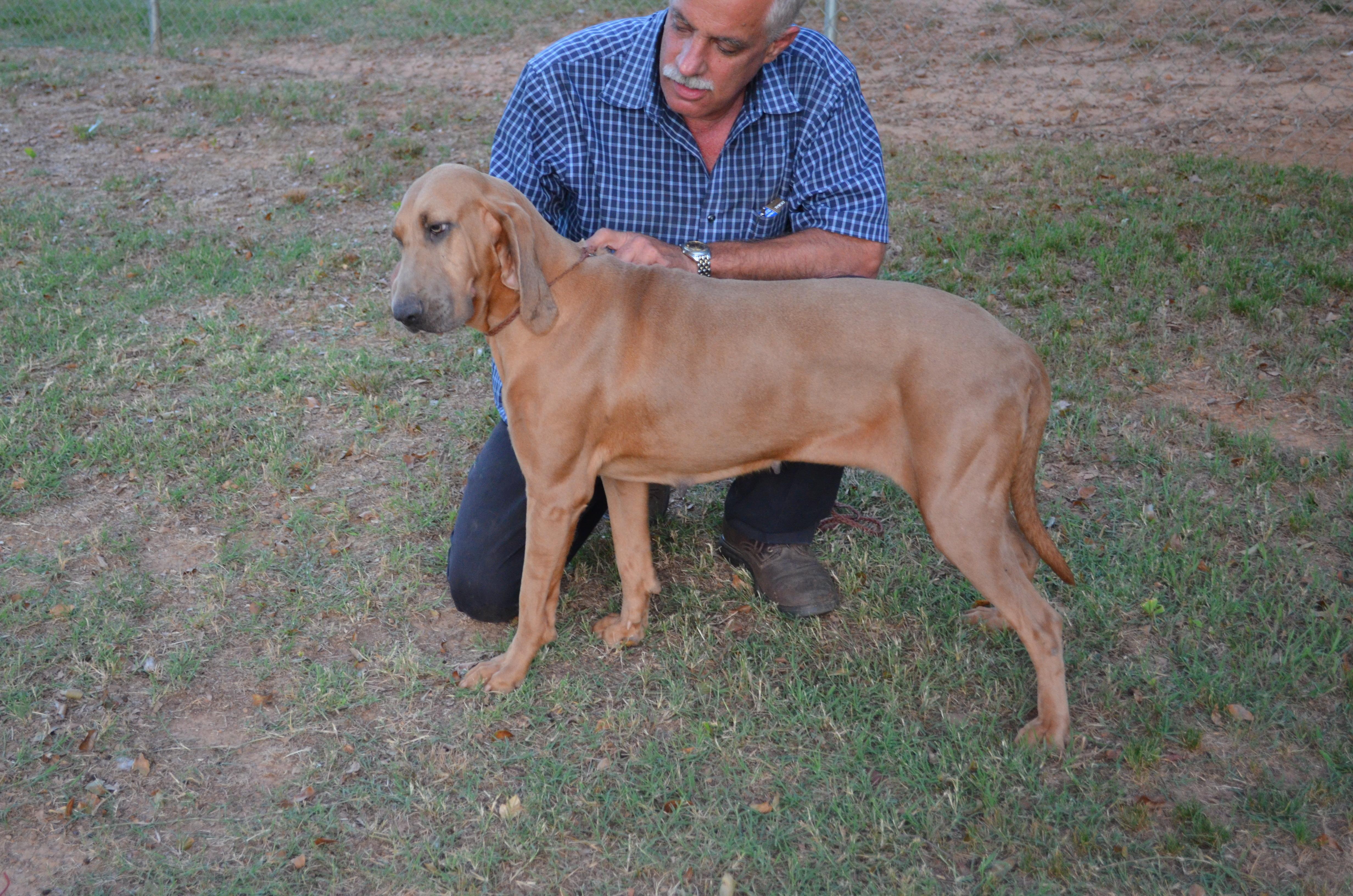 Nell Bloodhound