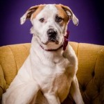 Adoptable (Official) Georgia Dogs for September 20, 2018