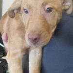 Adoptable (Official) Georgia Dogs for August 28, 2018