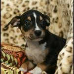 Adoptable (Official) Georgia Dogs for September 28, 2018