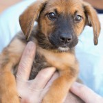 Adoptable (Official) Georgia Dogs for October 18, 2018