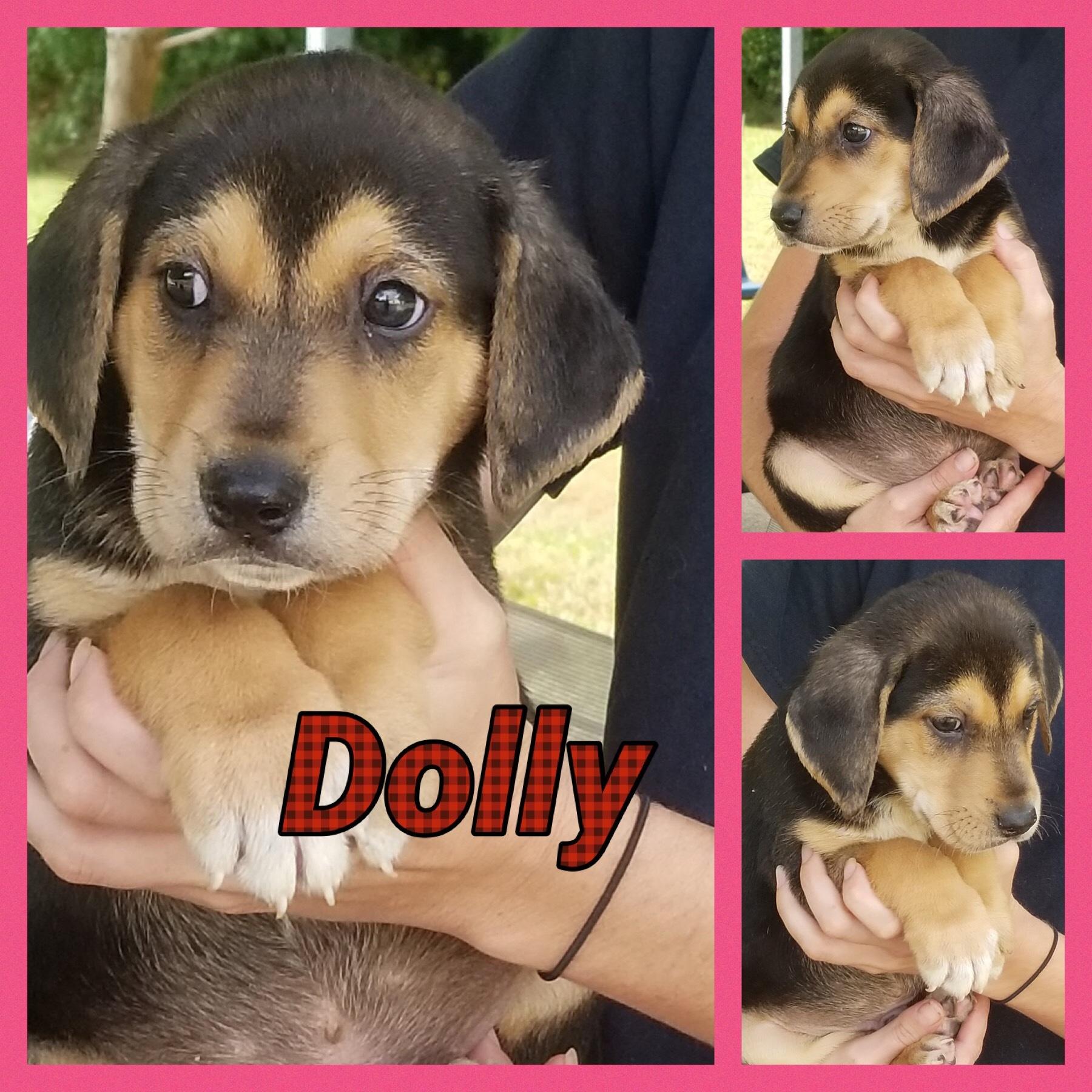 Dolly Smithgall