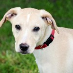 Adoptable (Official) Georgia Dogs for October 1, 2018