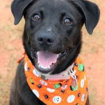Adoptable (Official) Georgia Dogs for November 13, 2018