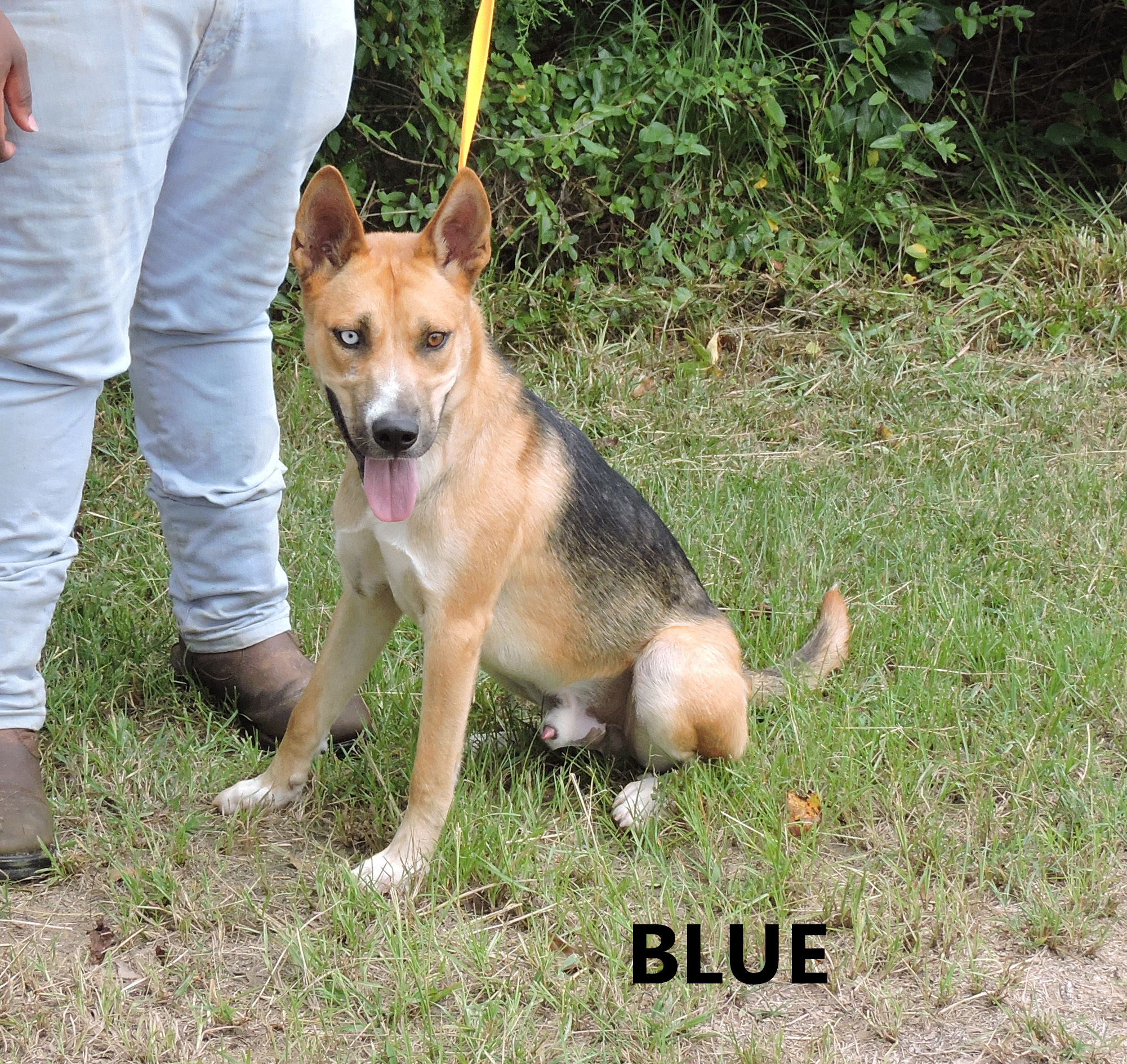 Blue WW