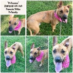 Adoptable (Official) Georgia Dogs for November 5, 2018