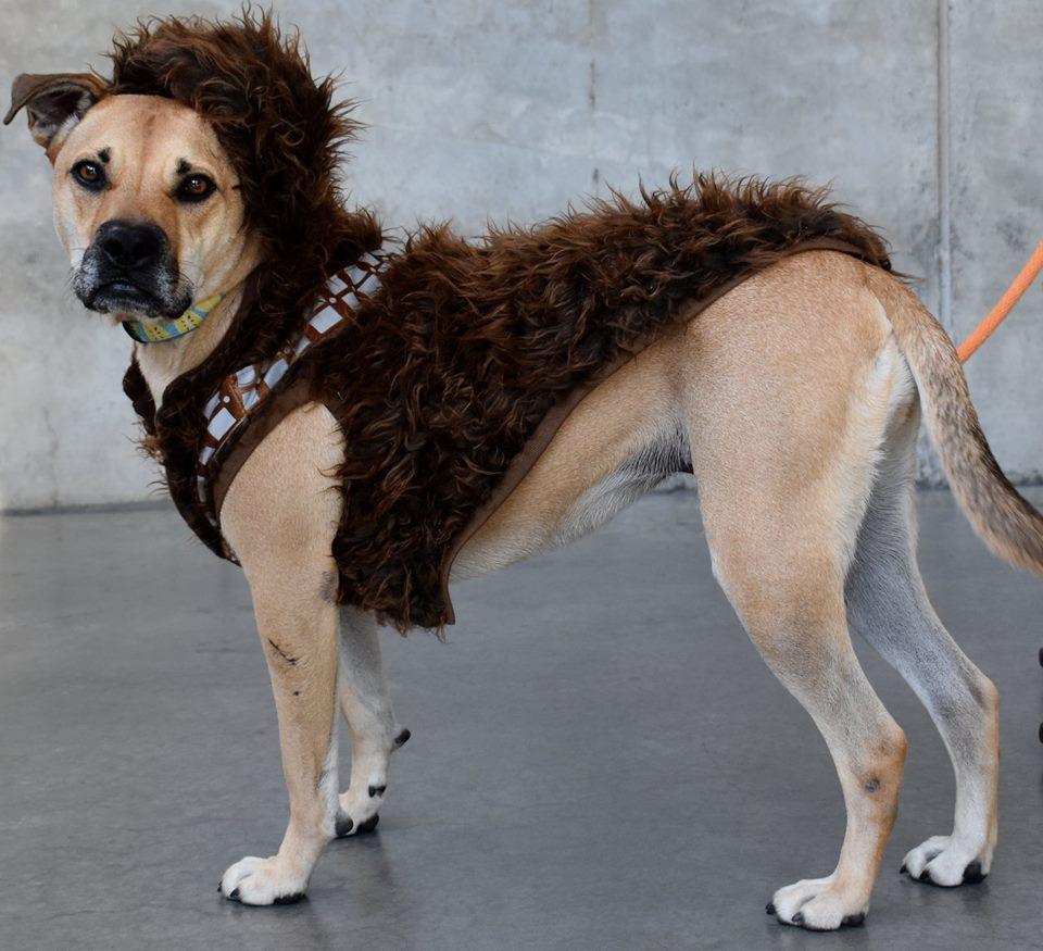 Tara Jail Dog