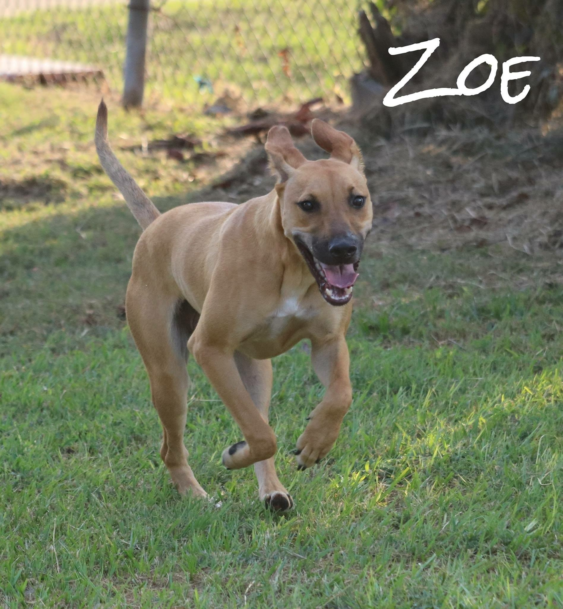 Zoe Macon