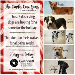 Adoptable (Official) Georgia Dogs for December 3, 2018