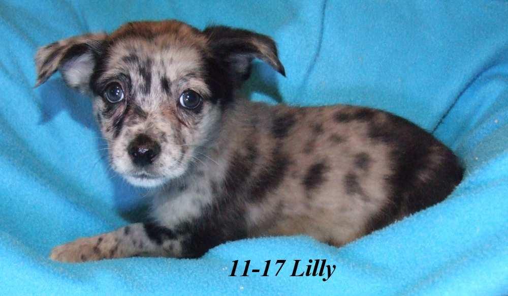 Lilly Waynesboro