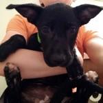 Adoptable (Official) Georgia Dogs for December 10, 2018