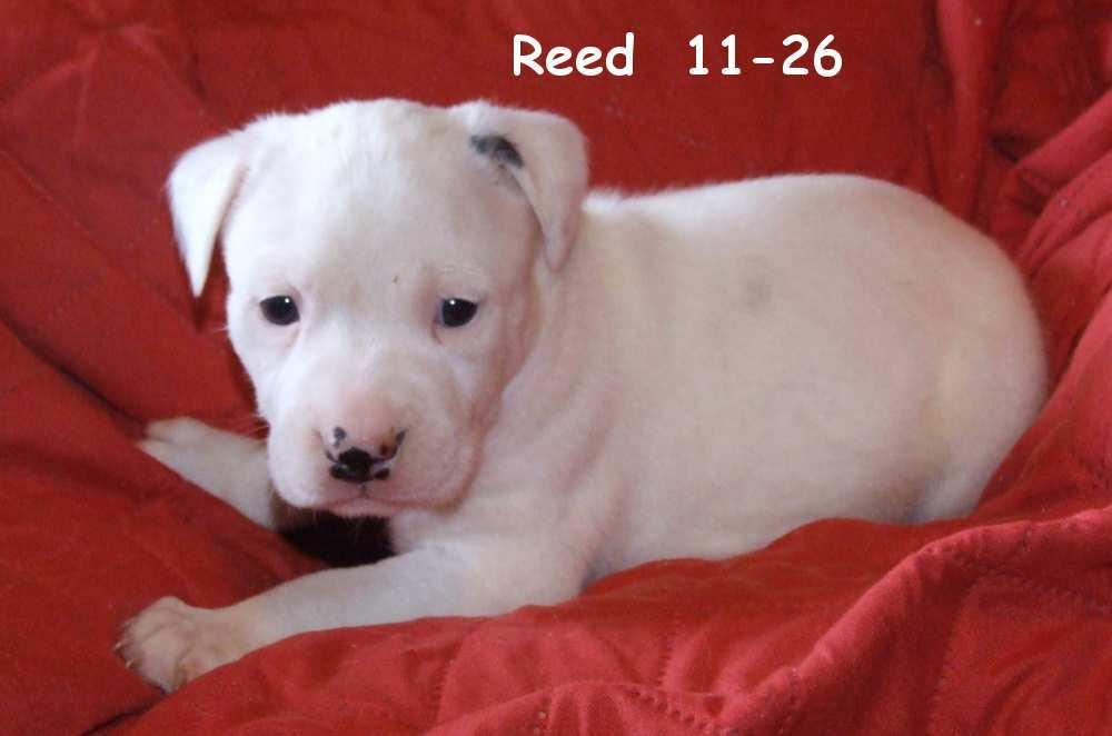 Reed Waynesboro