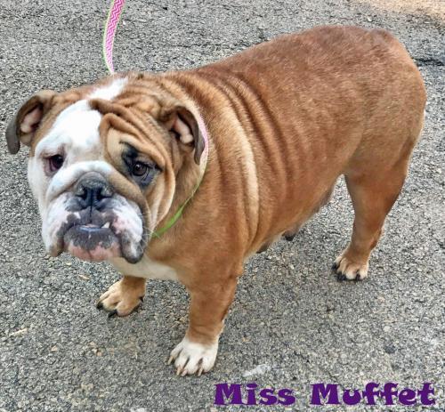 Miss Muffett
