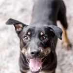 Adoptable (Official) Georgia Dogs for January 18, 2019
