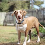 Adoptable (Official) Georgia Dogs for February 20, 2019