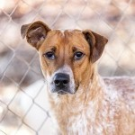 Adoptable (Official) Georgia Dogs for February 14, 2019