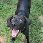 Adoptable (Official) Georgia Dogs for February 22, 2019