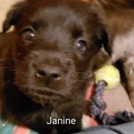 Adoptable (Official) Georgia Dogs for February 21, 2019