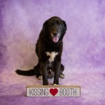Adoptable (Official) Georgia Dogs for February 13, 2019