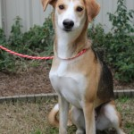 Adoptable (Official) Georgia Dogs for February 19, 2019