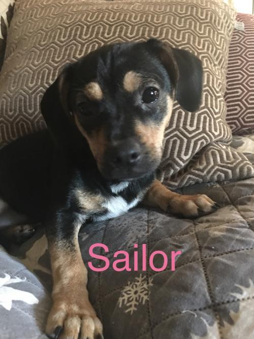 Sailor Glenwood