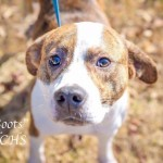 Adoptable (Official) Georgia Dogs for March 8, 2019