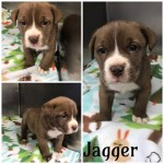 Adoptable (Official) Georgia Dogs for March 28, 2019