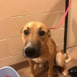 Adoptable (Official) Georgia Dogs for March 12, 2019