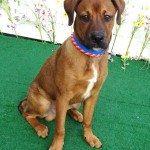 Adoptable (Official) Georgia Dogs for March 26, 2019