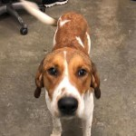 Adoptable (Official) Georgia Dogs for April 30, 2019