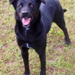 Adoptable (Official) Georgia Dogs for April 17, 2019
