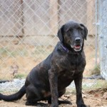 Adoptable (Official) Georgia Dogs for April 25, 2019