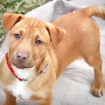 Adoptable (Official) Georgia Dogs for April 19, 2019