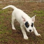Adoptable (Official) Georgia Dogs for April 1, 2019