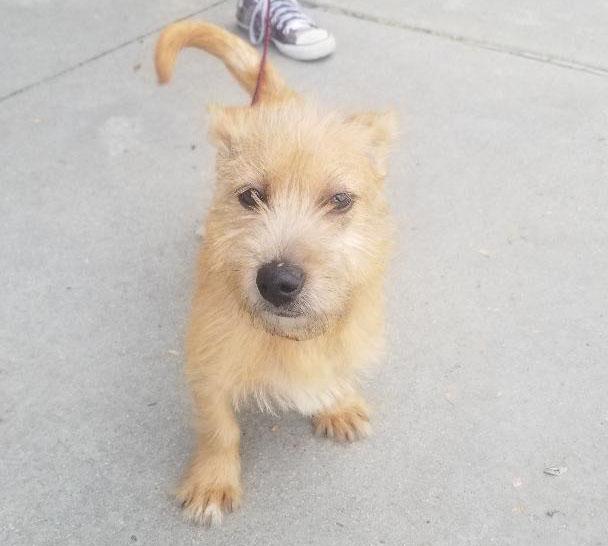 Terrier Puppy Paulding2