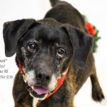 Adoptable (Official) Georgia Dogs for May 22, 2019