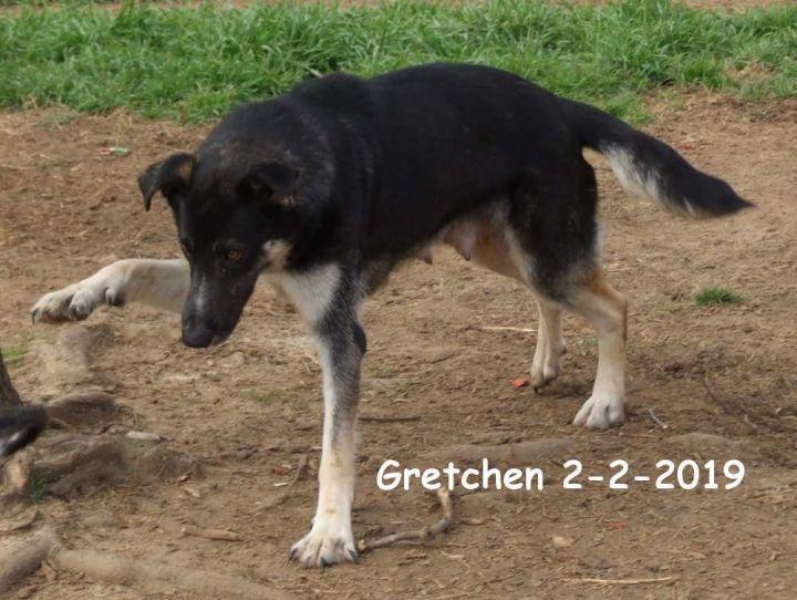 Gretchen Waynesboro