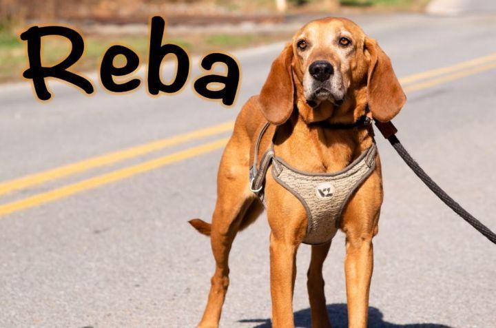 Reba Harlem