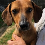 Adoptable (Official) Georgia Dogs for May 8, 2019