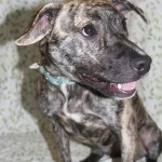 Adoptable (Official) Georgia Dogs for May 20, 2019