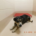 Adoptable (Official) Georgia Dogs for June 14, 2019