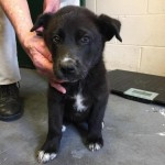 Adoptable (Official) Georgia Dogs for June 3, 2019