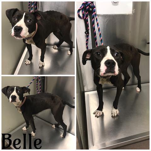 Belle Macon